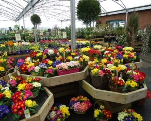 Trioscape Garden Centre Newent